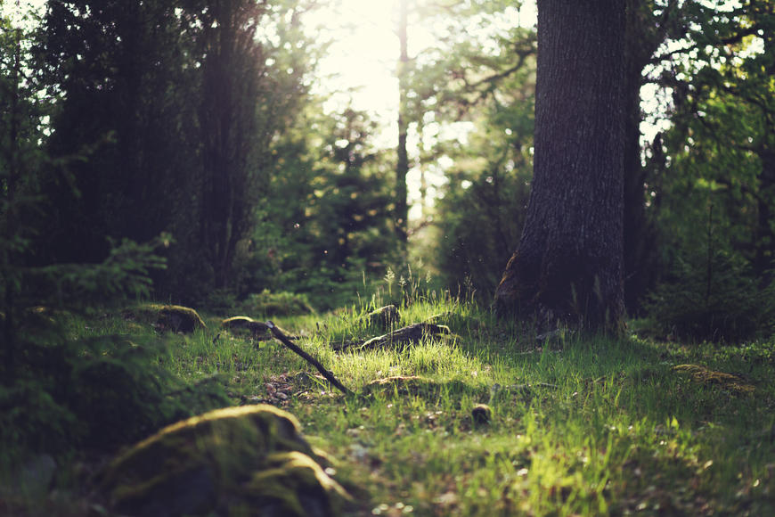 Sunlight on forest floor