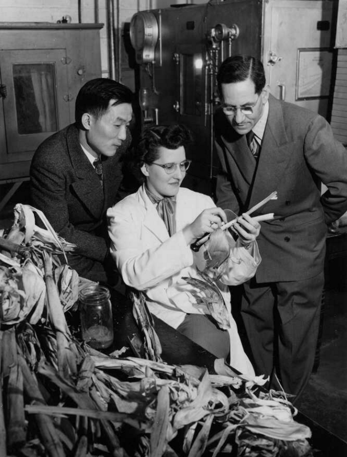 Henry Chang, Jeanne Marie Hellberg and Frederick Holdaway examine corn stalks
