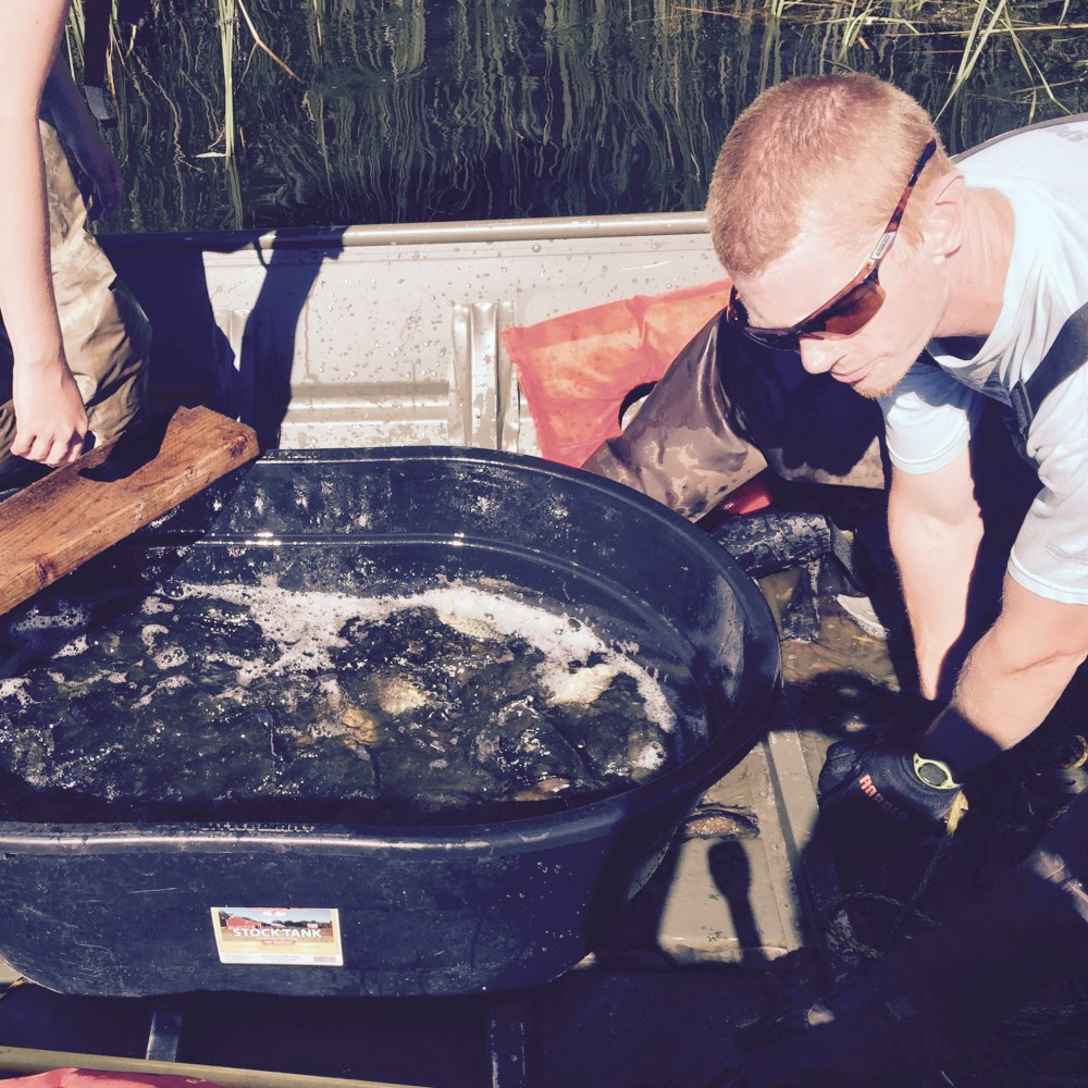 Carp Solutions' general manager Jordan Wein and his assistant Emma Hakanson finish emptying a trap net full of fish into a tub.