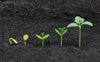Different stages of seedling growth