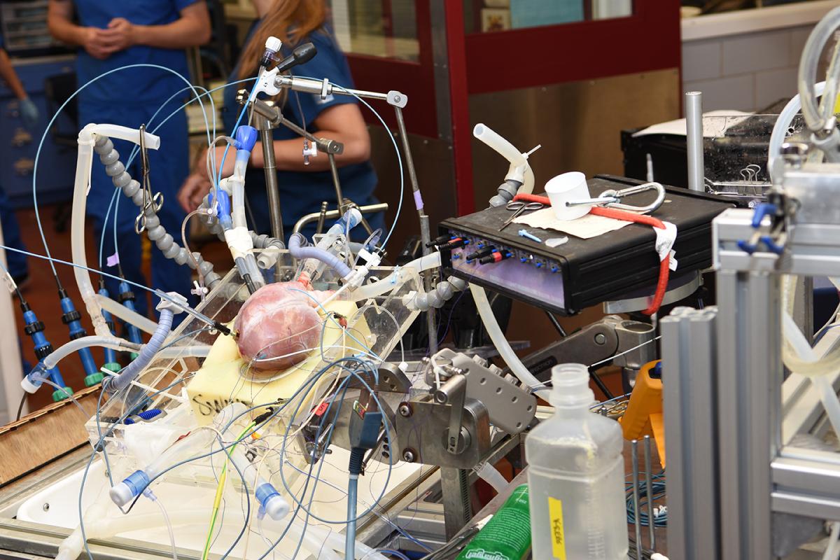 Pig heart encased in equipment