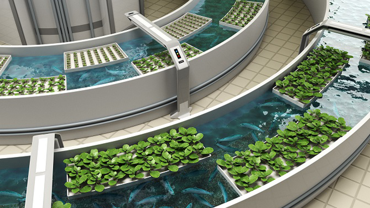 Students Lead Research Into Emerging Aquaponics Industry