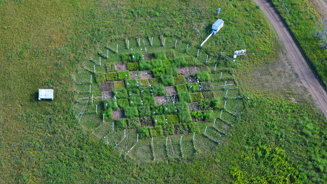 An aerial view of a research plot with different growing sections at Cedar Creek
