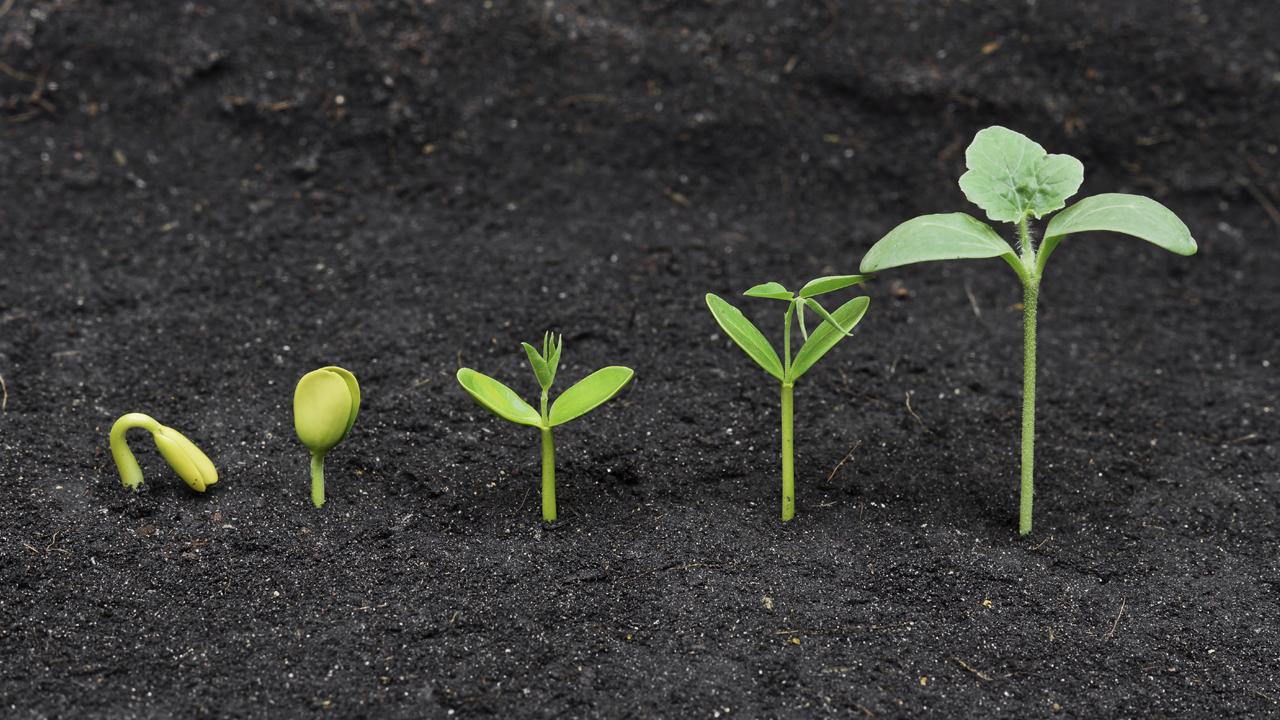 Growing seedlings in a row
