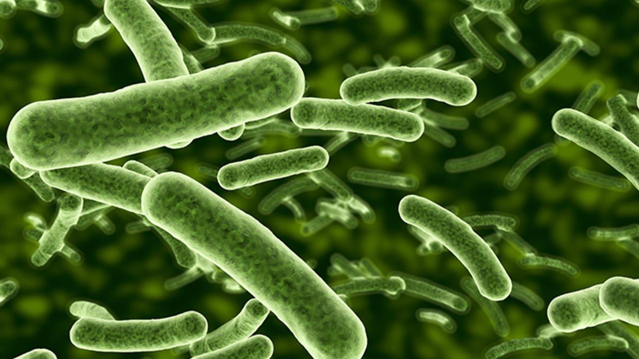 Green Bacteria rendering