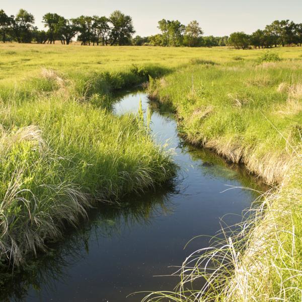 A small creek running through a green field